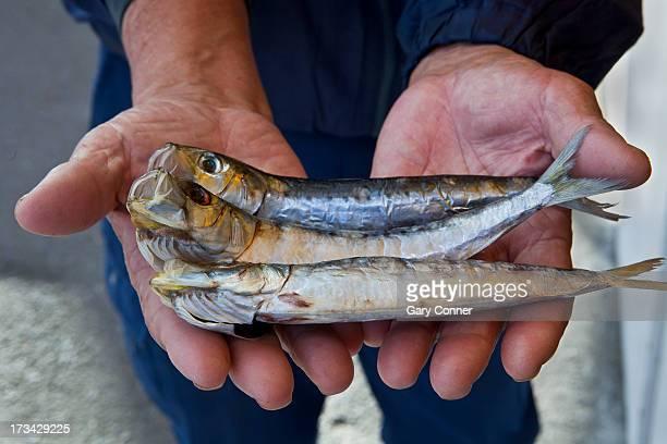 Fisherman holds dried fish