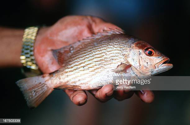 A fisherman holds out part of his day's catch from the waters off Phuket Island