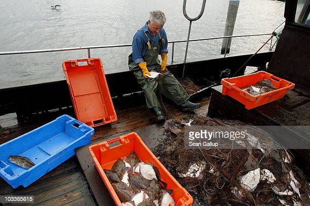 Fisherman Klaus Raack who is now 60 and started fishing when he was 15 pulls fish including plaice flounder and cod from his net on the deck of the...