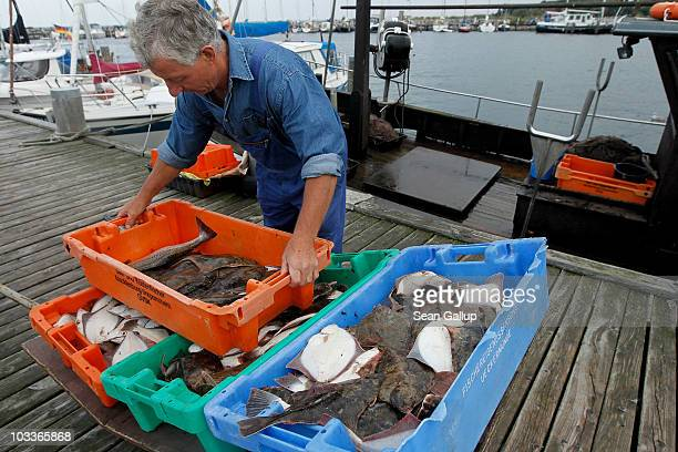 Fisherman Klaus Raack who is now 60 and started fishing when he was 15 unloads fish including plaice flounder and cod that he and his 30year veteran...