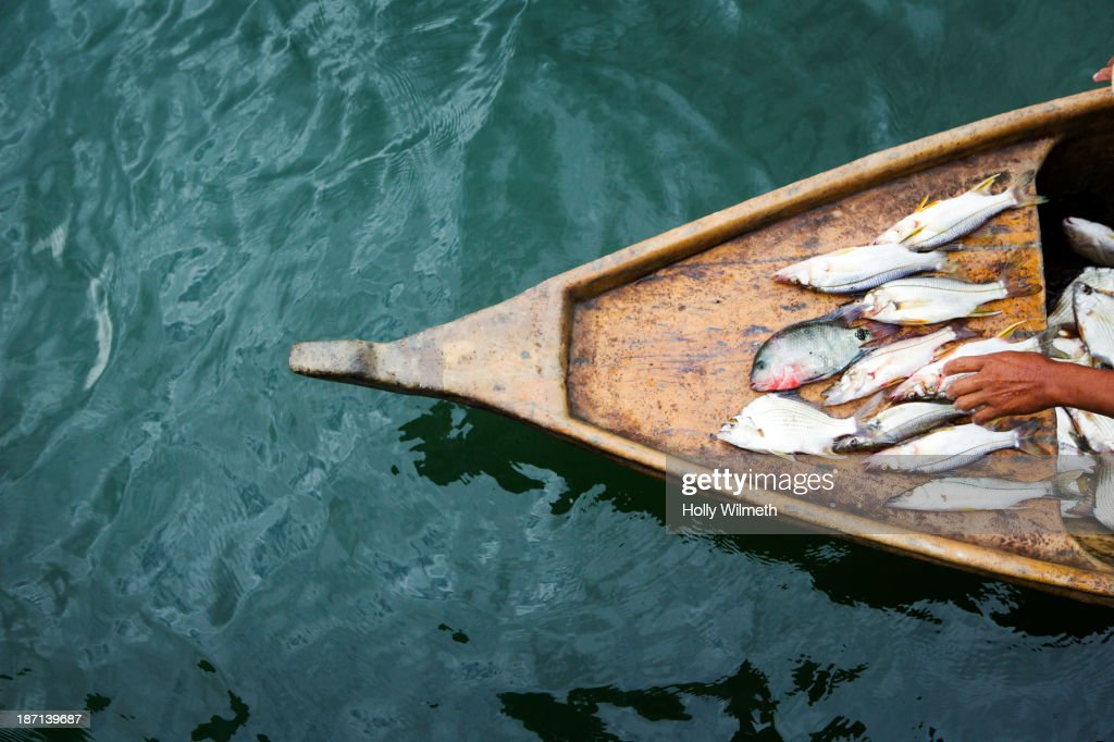 Fisherman laying out catch on boat : Stock Photo