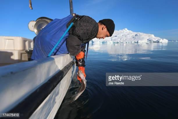 Fisherman Nikolaj Sandgreen pulls aboard a halibut as he fishes near an iceberg that broke off from the Jakobshavn Glacier on July 22 2013 in...