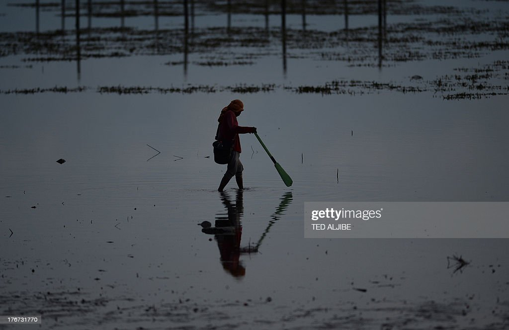 A fisherman wades through a mangrove area affected by an oil slick near the site of a ferry and freighter collision in Cordova town near Cebu City, central Philippines on August 18, 2013. Philippine divers hauled bodies out of rough seas August 18 in the grisly aftermath of a ferry disaster that claimed at least 38 lives, as oil leaked from the vessel, spreads for more than five kilometres (three miles) and into coastal villages, fishing grounds and mangroves.