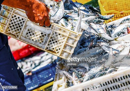 Fishermen arranging containers with fish : Stock Photo