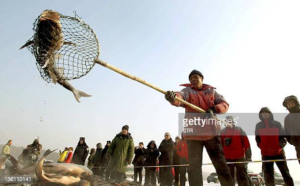 Fishermen catch fish during the annual winter fishing festival in Changchun northeast China's Jilin province on December 25 2011 Every winter this...
