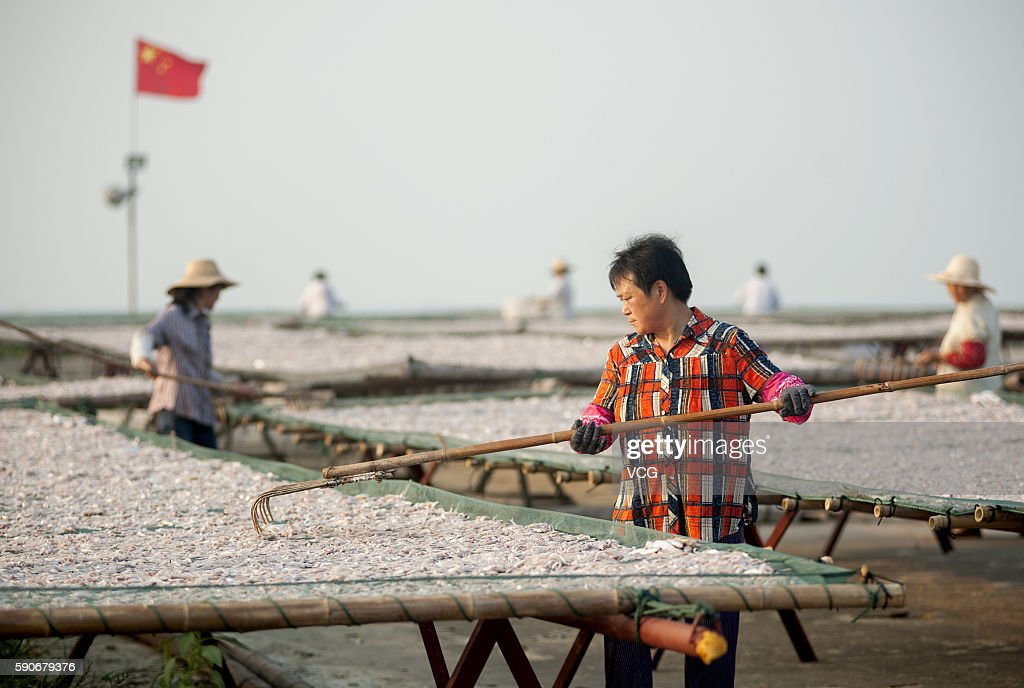 Fishermen dry whitebait fish at Zhongmiao Street on August 16 2016 in Chaohu Anhui Province of China The whitebait is one of the 'three treasures of...
