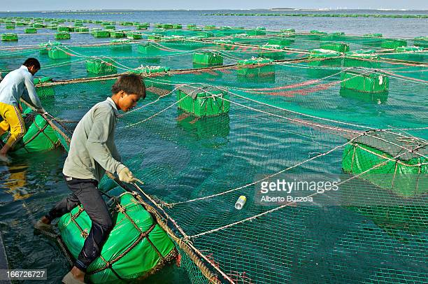 Fishermen from mainland China have found employment in Penghu Not many Chinese from the mainland are allowed to work in Taiwan but due to the high...
