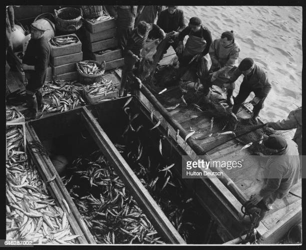 Fishermen from Newlyn and France unload the 40000 mackerel catch from the nets on the trawler Lord Barham