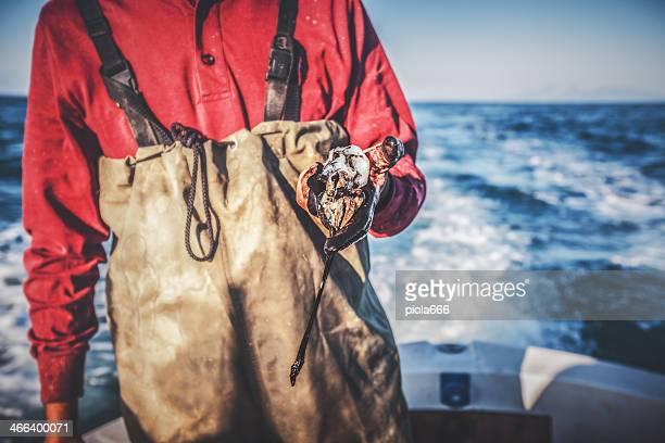Fishermen hands black for squids