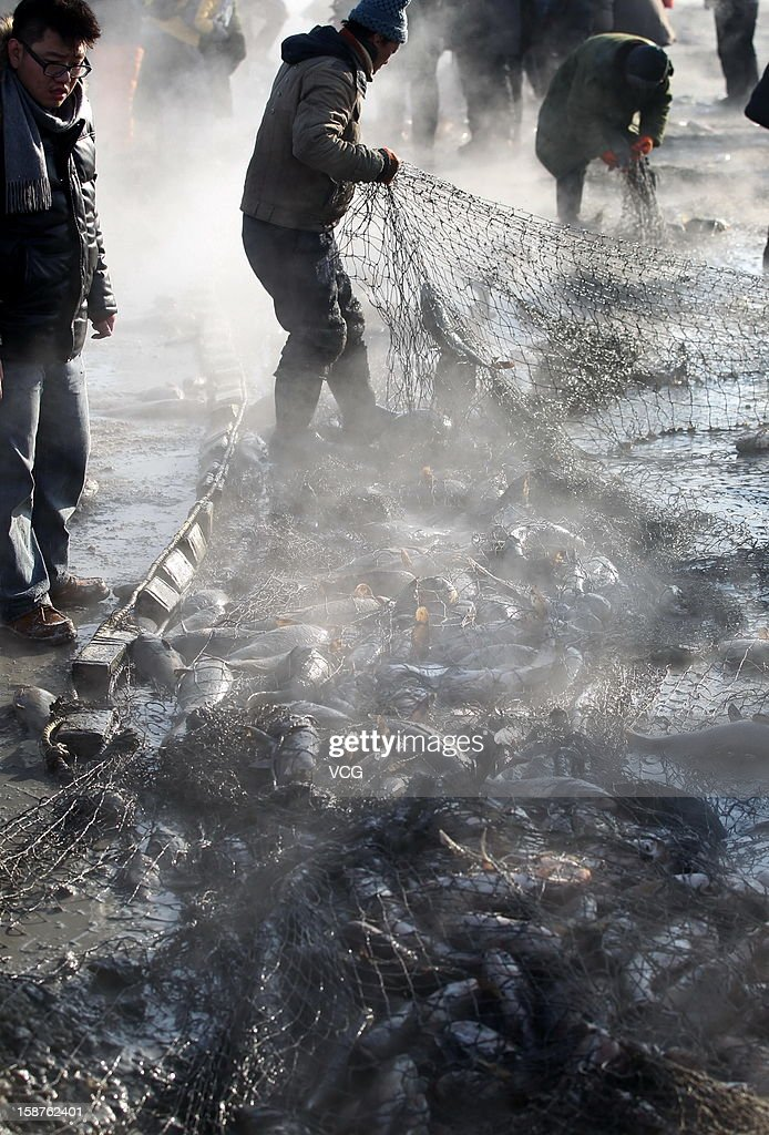 Fishermen haul in a large catch in net on the frozen Chagan Lake on December 27, 2012 in Songyuan, China. Traditional winter fishing in the Chagan Lake, the biggest freshwater lake in Jilin province, kicked off on Thursday. It usually lasts about two months and has been popular for more than 1,000 years.