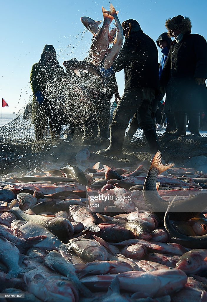 Fishermen haul in a large catch in net on the frozen Chagan Lake on December 26, 2012 in Songyuan, China. Traditional winter fishing in the Chagan Lake, the biggest freshwater lake in Jilin province, kicked off on Thursday. It usually lasts about two months and has been popular for more than 1,000 years.