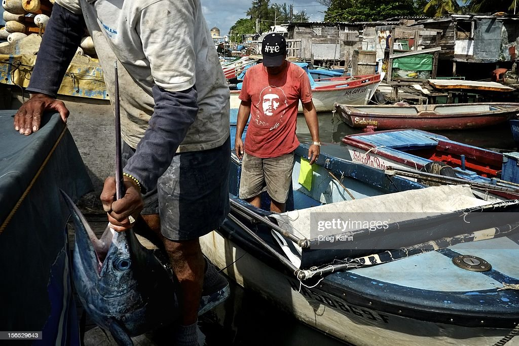 Fishermen haul in a marlin at a local dock November 16, 2012 in Havana, Cuba. Despite Cuba's fisheries being at critically low levels according to the United Nations, fishermen are still catching enough to make a living.