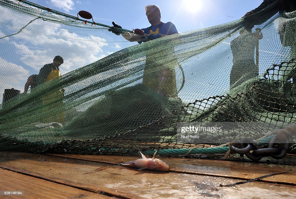 Fishermen pull the seine with Baltic smelt at the pier on the Neva River in St.Petersburg, Russia, on May, 04, 2016.