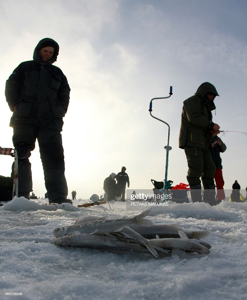 Fishermen stand on the frozen surface of the Kursiai Lagoon near Klaipeda, Lithuania, to catch smelts on January 27, 2013. Several thousands of amateur fishermen from all over Lithuania gather on the ice to catch the small fish.