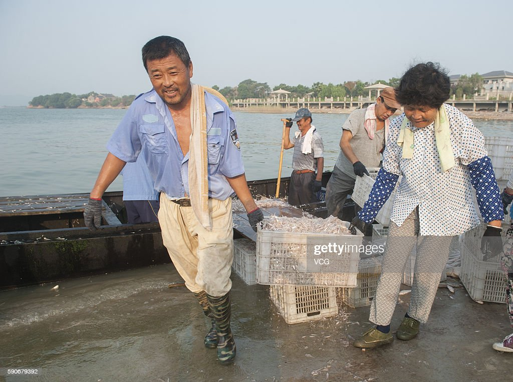 Fishermen transferport whitebait fish at Zhongmiao Street on August 16 2016 in Chaohu Anhui Province of China The whitebait is one of the 'three...