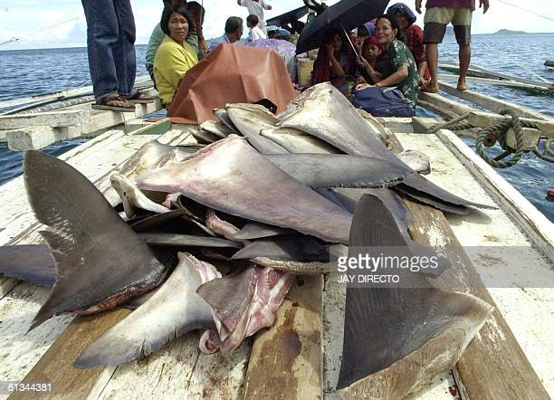 Fishermen transport a load of harvested shark fins 30 June 2000 aboard a small outrigger from the port of Jolo town in the southern Philippine island...