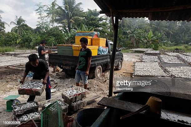 Fishermen unload fish for drying in Pangkal Pinang Bangka Island Indonesia on Thursday July 19 2012 In recent years about onethird of all the tin...