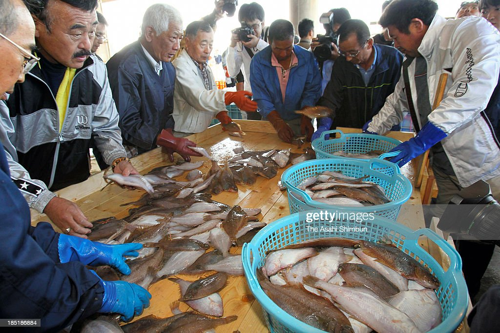 Fishermen unload fishes at Onahama Fish Port after their trial fishing on October 18, 2013 in Iwaki, Fukushima, Japan. Those confirmed safe for consumption in the sampling inspection will be shipped to markets at supermarkets in Fukushima Prefecture.