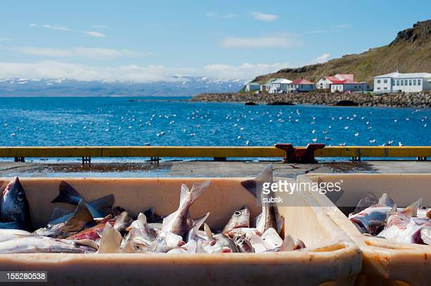fishery on iceland
