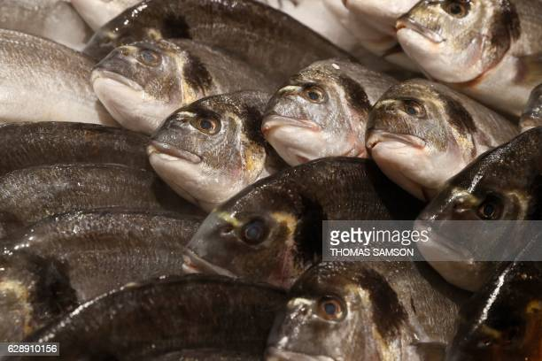 Fishes are pictured in the fresh fish section of an hypermarket store of French retail giant Carrefour in Villeneuvelagarenne near Paris on December...
