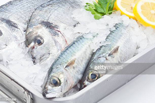 Fishes on steel tray with ice