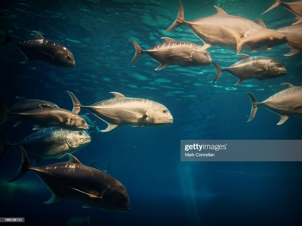 Fishes : Stock Photo