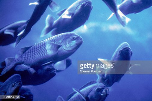 Fishes swimming underwater : Stock Photo