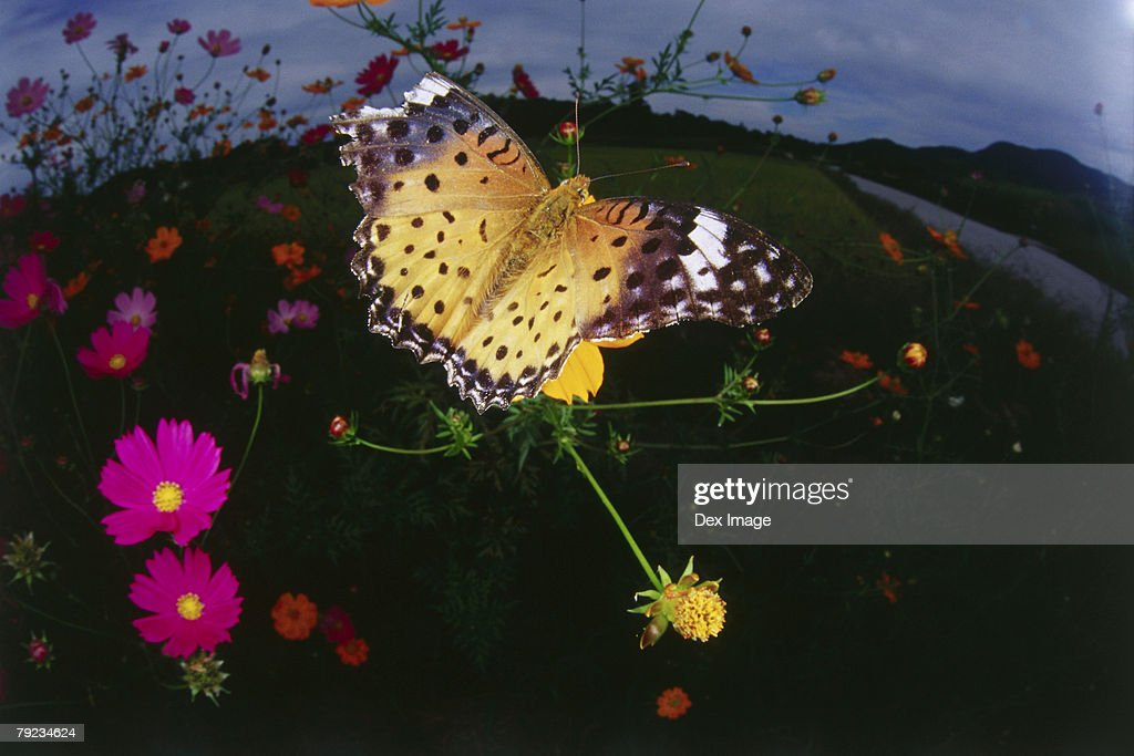 Fisheye view of Butterfly on flower, close-up : Stock Photo