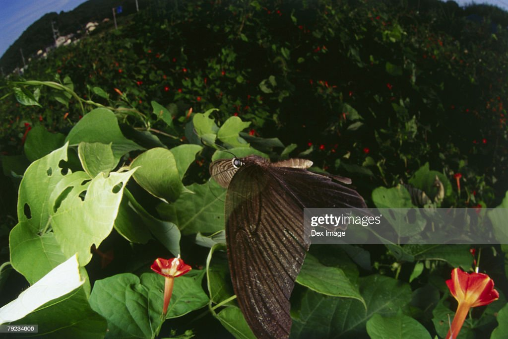 Fisheye view of Butterfly on leaf : Stock Photo