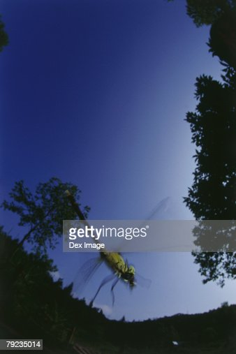 Fisheye view of dragonfly in flight : Stock Photo