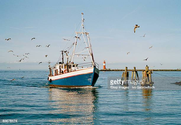 A fishing boat with seagulls flying around