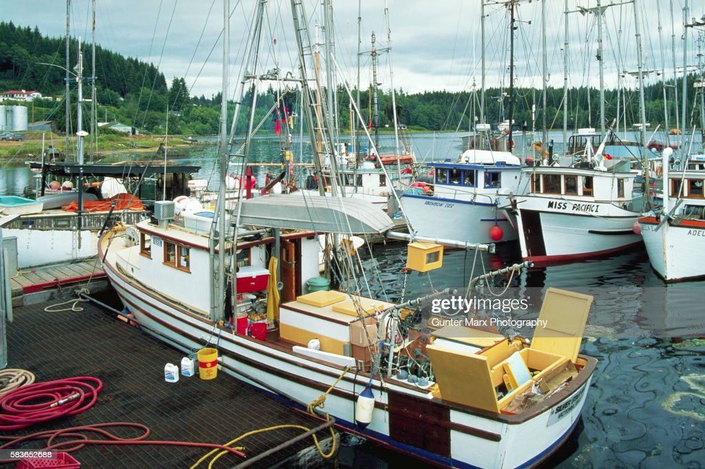 Fishing Boats Docked at Coal Harbour, Vancouver Island