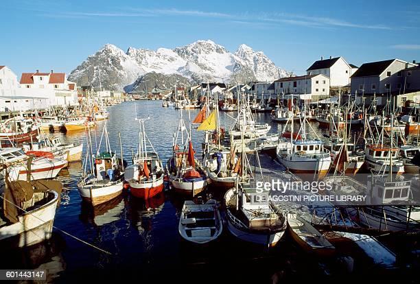 Fishing boats in Henningsvaer harbour Lofoten Nordland Norway