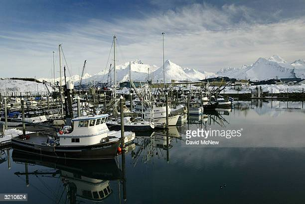 Fishing boats in the small boat harbor are surrounded by snowy peaks on April 1 2004 in Valdez Alaska Fifteen years after the Exxon Valdez...