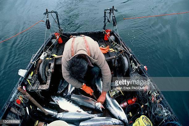 Fishing in Alaska United States Salmon fisherman