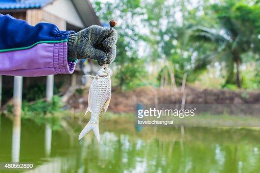 Fishing on a lake. Fresh fish : Stock Photo