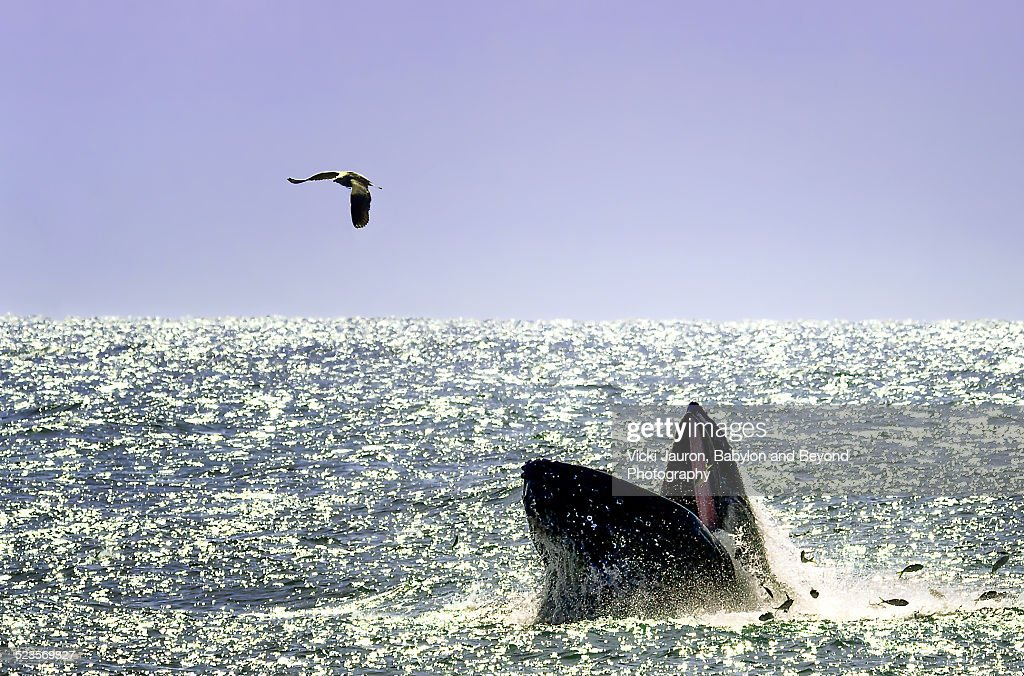 Fishing Partners - The Humpback and the Gull