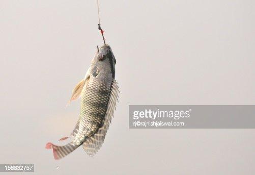 Fishing ...
