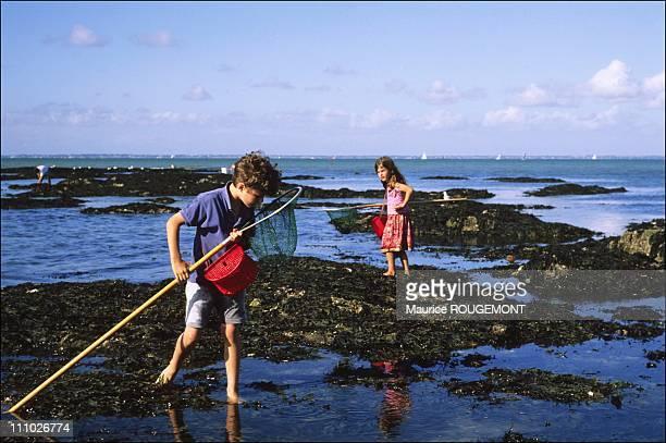 Fishing shrimps in Noirmoutier Island in Ile de Noirmoutier France on October 17th 2005