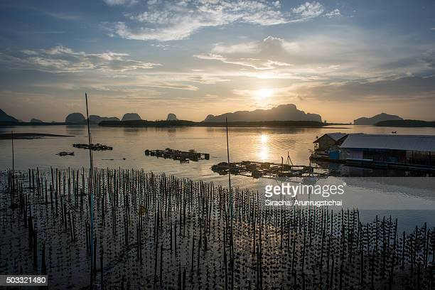 Fishing village with oyster farm and fish farm in the morning