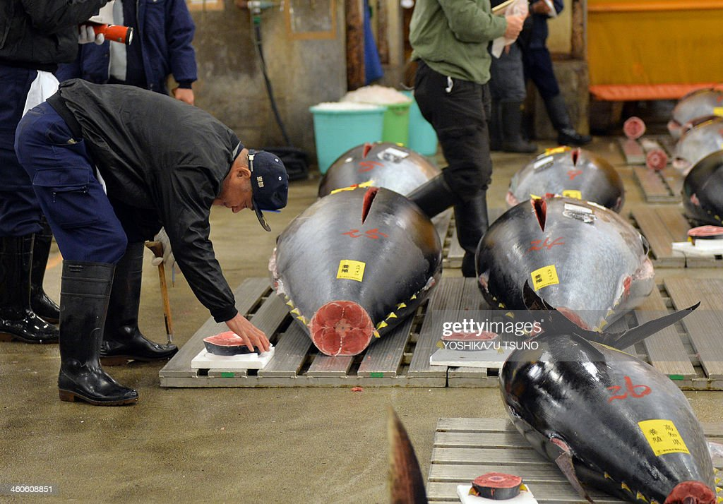 A fishmonger checks a bluefin tuna before the first trading of the new year at Tokyo's Tsukiji fish market on January 5, 2014. A bluefin tuna was on January 5 traded at 70,000 USD (7.36 million yen) at the wholesale market. AFP PHOTO / Yoshikazu TSUNO