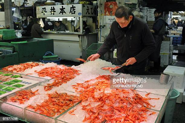 A fishmonger checks shrimps at his shop at the world's largest fish market the Tsukiji market in Tokyo on February 19 2010 AFP PHOTO / Yoshikazu TSUNO