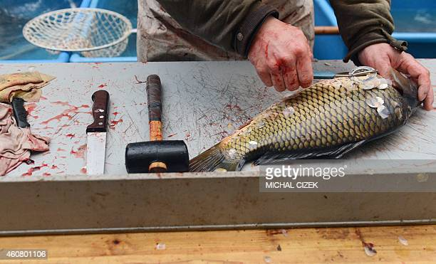 A fishmonger scales a carp for a customer at a central Prague market on December 23 2014 Fried carp potato salad and fish soup are a traditional meal...