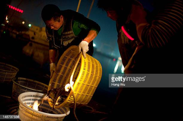 A fishmonger weighs fish products at a port on May 28 2012 in Qingdao China Marine fishery resources in China becomes less and lees due to excessive...