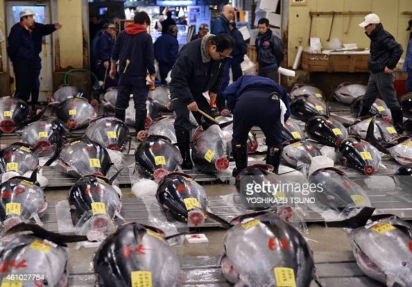 Fishmongers inspect bluefin tuna before the first trading of the new year at Tokyo's Tsukiji fish market on January 5 2015 A bluefin tuna was traded...