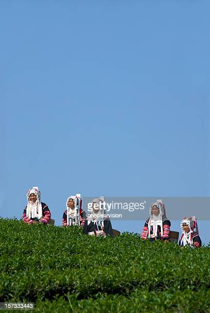 Five Akha Tea Pickers