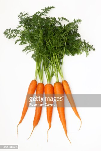 Five fresh organic carrots with green tops. : Stock Photo