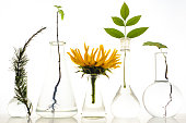 Five laboratory flasks with plants on white background. maple, sunflower, mountain ash,larch, needles