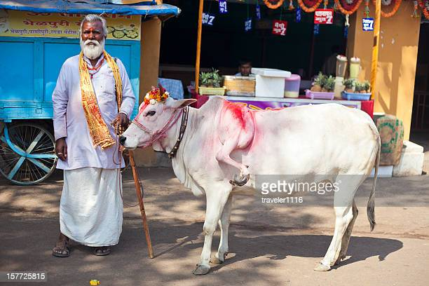 Five Legged Cow From India