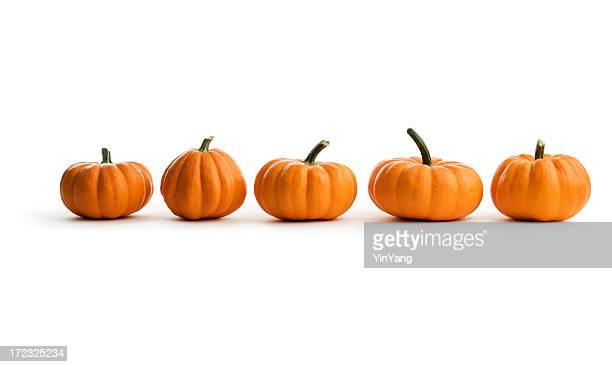 Fünf Orange Kürbis-Kürbis in Folge einen Herbst-Food